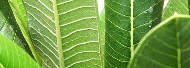 Texture foglie e piante in alta risoluzione